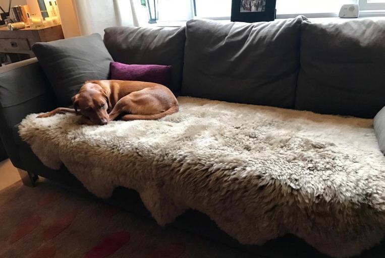 sheepskin sofa